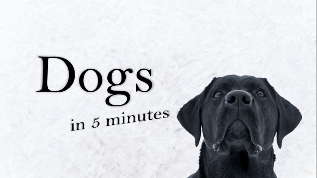Learn About Dogs in 5 Minutes