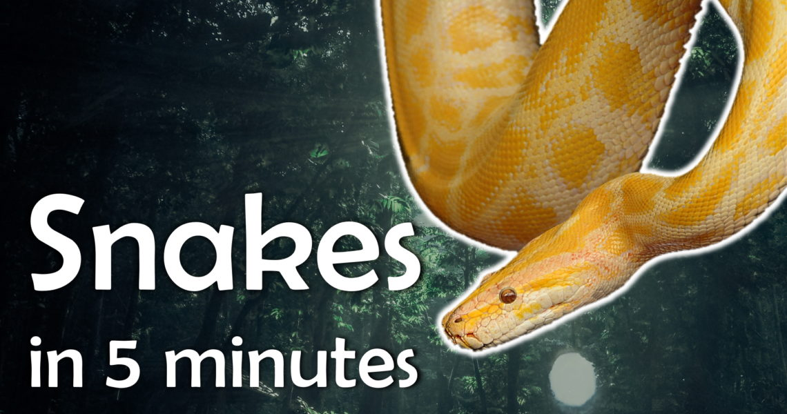 Learn About Snakes in 5 Minutes